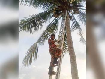 Anggota bomba menyelamatkan seekor kucing yang terperangkap atas pokok di Tali Air 11, Pasir Panjang semalam.