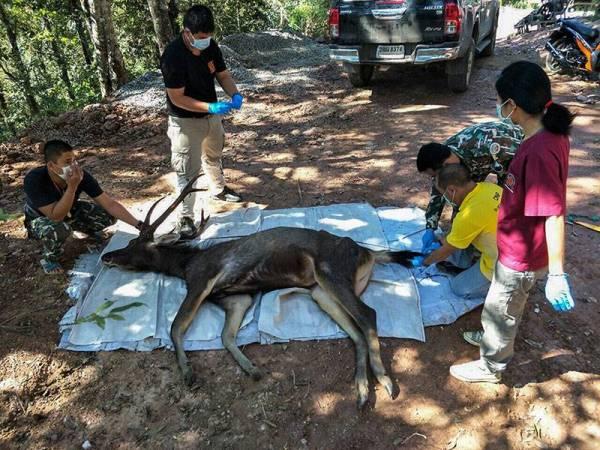 Rusa terbabit didakwa menelan beg plastik dan sisa sampah lain. - Foto AFP
