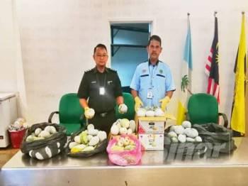 Pegawai Maqis di LTABPP menunjukkan buah mangga yang dirampas semalam.