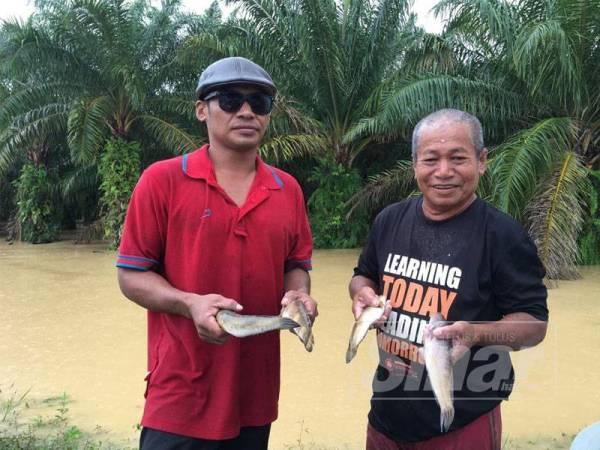 Othman (kanan) bersama anaknya menunjukkan haruan antara spesis ikan yang ditangkap.