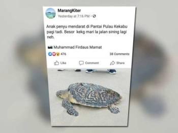 Gambar penyu yang dirakam 'mendarat' di Pantai Pulau Kekabu. - Foto Muhammad Firdaus Mamat