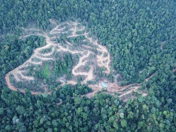 Sebahagian kawasan Hutan Simpan Kledang Saiong digondolkan akibat aktiviti pembalakan.