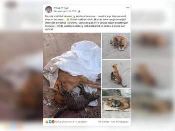 Perkongsian D'Cat D'Hati kini tular di media sosial yang meraih 4,100 tanda marah serta 1,700 telah berkongsi kisah ini.