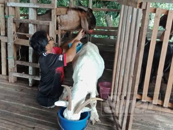 Kekurangan bukan halangan buat Shahrin Naim untuk mengusahakan ternakan kambing.