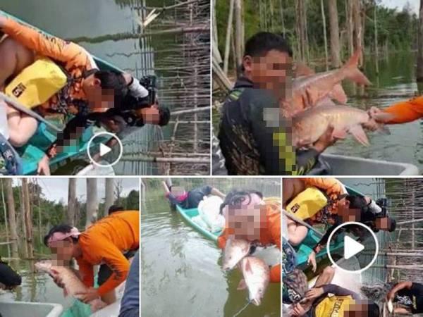 Tular gambar dan video pemburu ikan kelah berjaya menangkap puluhan spesis eksotik itu di sebuah empangan di Hulu Terengganu.
