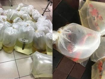 Sebanyak 59 ekor ikan kelisa dan tujuh ikan koi yang dibungkus dalam plastik lut sinar dirampas dalam pemeriksaan di Kompleks ICQS Bukit Kayu Hitam Isnin lalu.