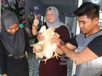 Ruszilawati (tengah) menunjukkan ayam kaki empat miliknya yang ditemui beberapa minggu lalu.