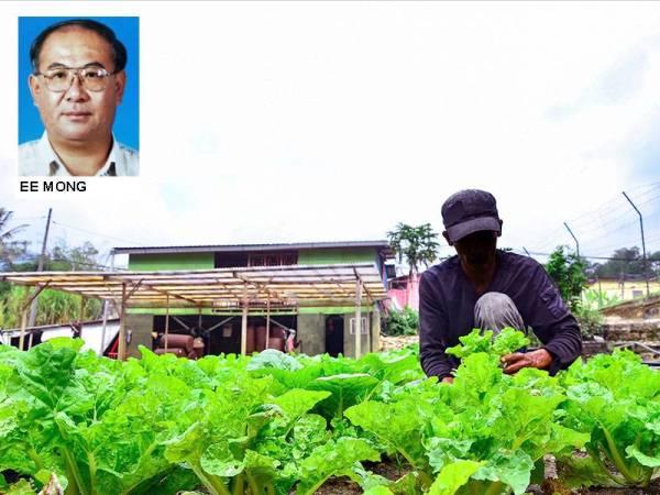 Sektor pertanian dan pelancongan di Cameron Highlands, Pahang yang bernilai RM1.4 bilion setahun kini terancam angkara wabak Covid-19.