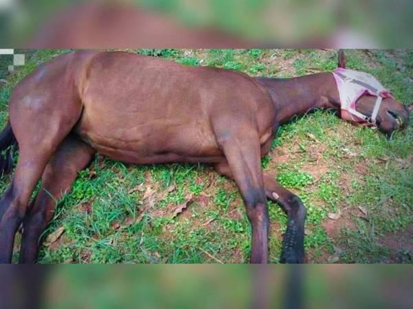 Persatuan Ekuestrian Malaysia (EAM) hari ini mengeluarkan amaran kepada pemilik kuda tempatan berikutan penularan Penyakit Kuda Afrika (AHS) di Thailand.