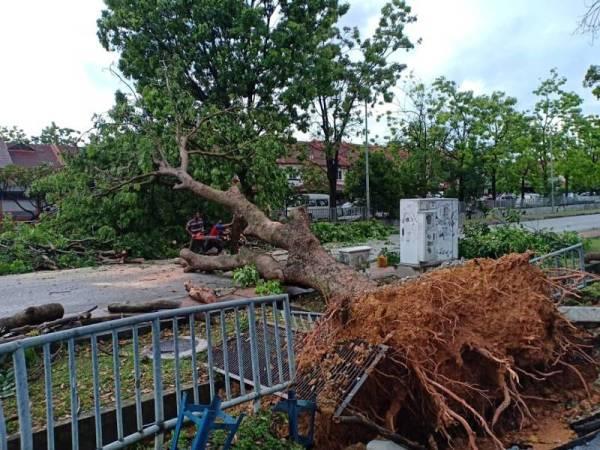 Kejadian pokok tumbang yang berlaku di Seksyen 7, petang tadi.