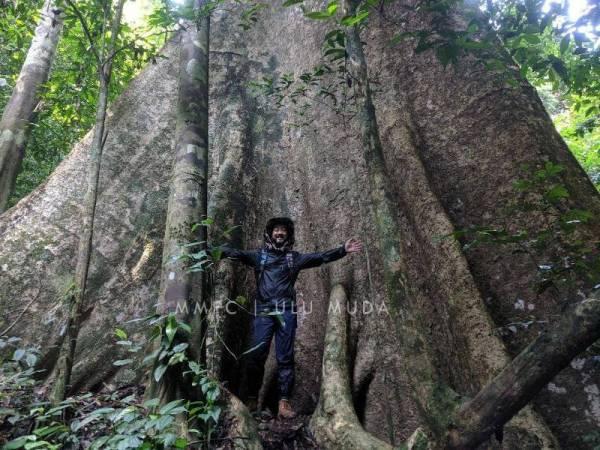 Mukhriz meninjau Hutan Simpan Ulu Muda setelah kerajaan negeri menghentikan pembalakan di kawasan berkenaan, Julai lalu.