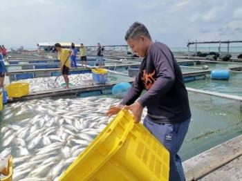 Jabatan Perikanan Malaysia telah menasihati semua penternak di Perak dan Pulau Pinang untuk memindahkan ikan ternakan dari kawasan yang terlibat ke kawasan yang tiada ledakan.