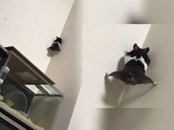 Kuro keluar dari sangkar sebelum kantoi dengan Yuka. Aksi lucu Kuro memanjat dinding tular di media sosial. - Foto Instagram Yuka