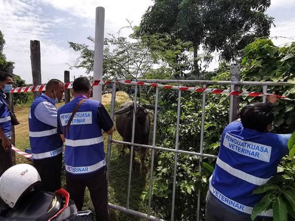 Anggota penguat kuasa JPV Terengganu menutup pintu masuk ke kandang kerbau peliharaan Muhammad Syukur dan bapanya, Khamis di Kampung Banggol Katong, Serada hari ini.