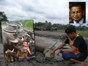 Muhammad Syukur melihat kerbau peliharaan bapanya yang ditemui mati secara berperingkat sejak Rabu lalu. Gambar kecil: Dr Azman Ibrahim