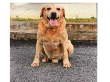 Anjing pengesan K9 JSJ Pahang bernama Tho mati akibat sakit tua petang semalam. - Foto Facebook JSJ Kontinjen Pahang