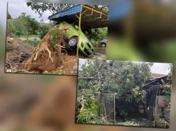 Keadaan kereta milik Noor Hayati terangkat akibat terkena akar pokok yang tumbang. Gambar bawah: Keadaan pokok menghempap rumah penduduk.