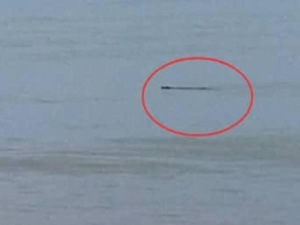 Buaya jenis Tembaga yang dilihat timbul di permukaan air di Pantai Bisikan Bayu, Semerak di Pasir Puteh.