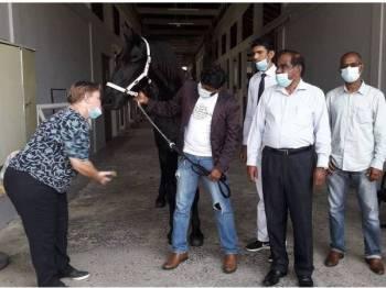 Leonie (kiri) Peter dan Sooriyan bermesra dengan Lancelot iaitu kuda jantan jenis Friesian yang dipelihara di Leisure Farm, Gelang Patah, Iskandar Puteri hari ini.