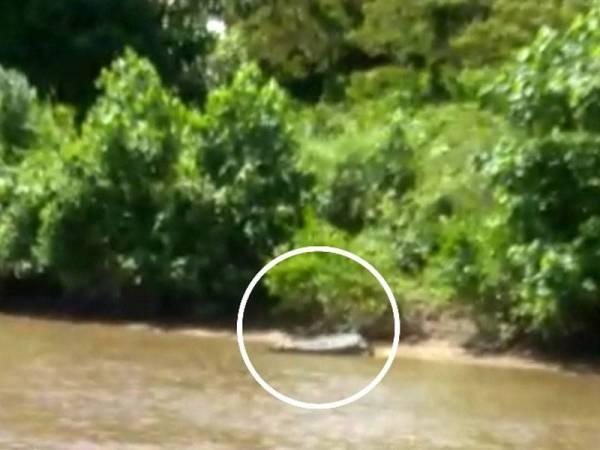 Kehadiran buaya di sekitar Sungai Marang sejak lebih seminggu lalu menggemparkan penduduk di sini sekaligus menimbulkan kebimbangan akan tahap keselamatan orang ramai.