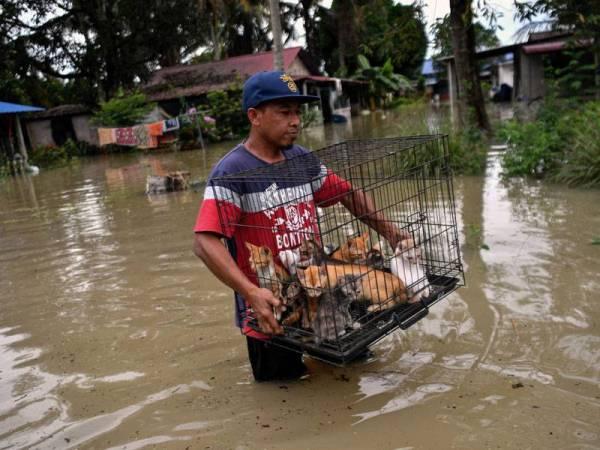 Penduduk setempat, Raffe Zain Md Isa, 46, menyelamatlan anak-anak kucing yang kesejukan selepas rumahnya terjejas akibat banjir ketika tinjauan di Kampung Changkat Jong, Teluk Intan hari ini. - Foto Bernama
