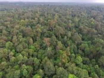 PHSKLU desak cadangan penyahwartaan Hutan Simpan Kuala Langat Utara ditarik segera selari dengan bantahan yang jelas daripada rakyat Selangor.