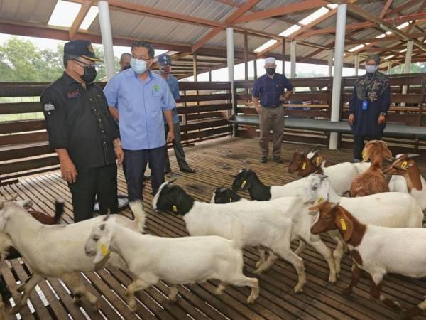 Ahmad melihat baka kambing kacukan Katjang-Boer ketika melawat Pusat Kecemerlangan Penyelidikan (COE) Haiwan Ternakan di MARDI Kluang.